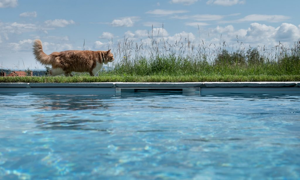 Aus technischer Sicht ist der Skimmer verantwortlich für die Absaugung des Poolwassers und aus optischer Sicht bestimmt er den Wasserstand im Pool.